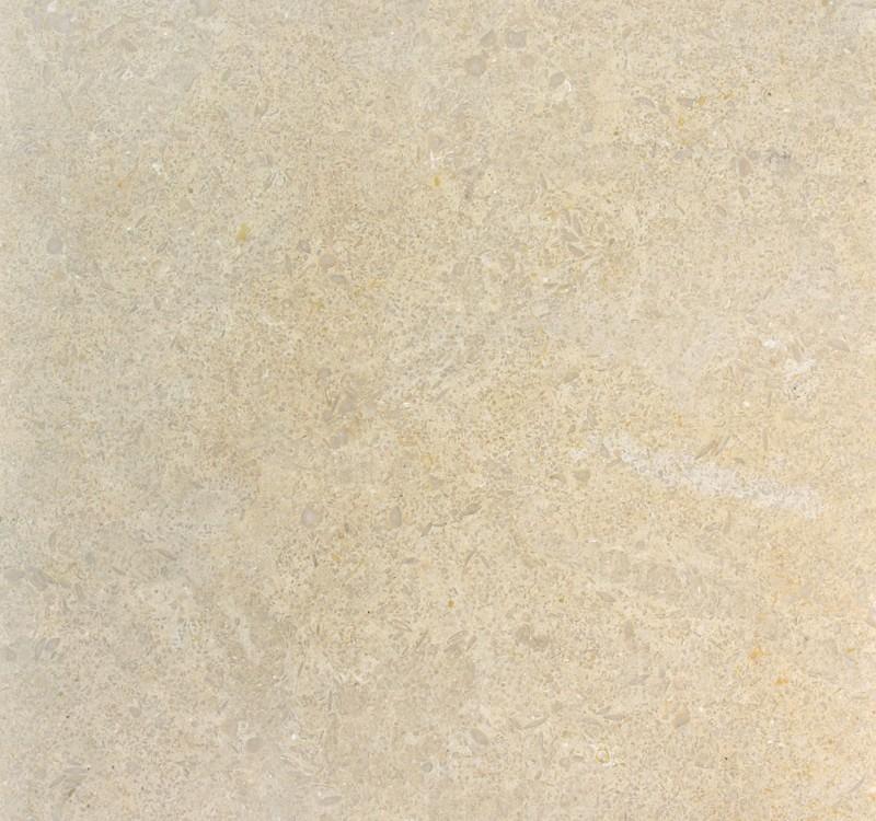 seashell-limestone-tile